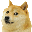 wow much doge